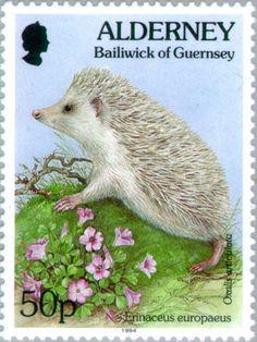 Stamp: Oxalis articulata, Erinaceus europaeus (Alderney) (Flora and Fauna) Mi:GG-AL 80,Yt:GG-AL 80,Sg:GG-AL 75