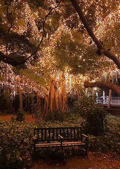 Where to find fairies in Brisbane City - Visit Brisbane Beautiful Landscapes, Beautiful Gardens, Illumination Noel, Enchanted Forest Wedding, Forest Theme, Nature Aesthetic, Jolie Photo, Fantasy Landscape, Dream Garden