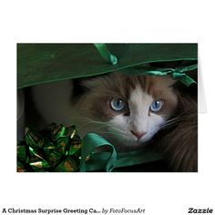 A Christmas Surprise Greeting Card, Photography by Judy Vincent. Ragdoll cats, animals, gifts.