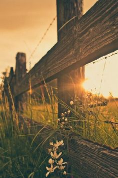ImageFind images and videos about photography, nature and flowers on We Heart It - the app to get lost in what you love. Beautiful World, Beautiful Places, Beautiful Scenery, Beautiful Sunset, Foto Cowgirl, Natur Wallpaper, Country Backgrounds, Country Life, Country Living