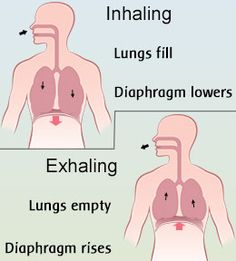 Diaphragmatic breathing involves the contraction of the diaphragm, which is a muscle that acts as a partition between the chest cavity and the abdominal cavity. This Buzzle write-up explains this breathing technique along with its benefits. Singing Lessons, Singing Tips, Music Lessons, Breathing Techniques, Relaxation Techniques, Speech Language Pathology, Speech And Language, Breathe In The Air, Diaphragmatic Breathing