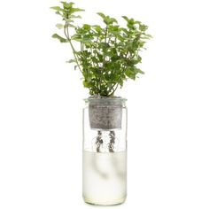 Eco Planter - Mint – ModernSprout
