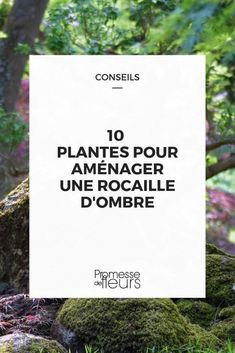 10 Plantes pour rocaille d'ombre #jardin #jardinage #rocaille #plantes #fleurs #ombre Horticulture, Backyard, Patio, Garden Art, Mood Boards, Cards Against Humanity, Blog, Gardening, Outdoor