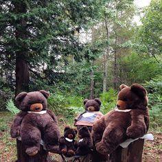 【pekeponi_】さんのInstagramをピンしています。 《#月の輪熊#ツキノワグマ#サンアンドスター#ふわもこ部#bear#森#forest#family》