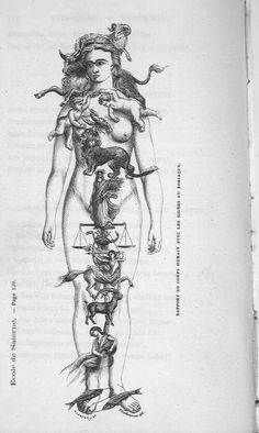 """""""According to occult teaching, every body consists of twelve members. The one uppermost is called the Ram; the adjacent one, the Bull; the one with the hands, the Twins; the chest is called the Crab; everything in the region of the heart is the Lion; below it-the trunk- is the Virgin; the hips, the Scales; below this, the Scorpion; and still farther down: the thigh, the Archer; the knee, the Goat; the lower leg, the Water-Carrier; and the feet, the Fishes. """"The human body, then, is divided…"""
