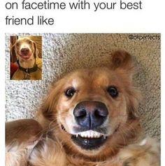 Shared via Thunder Dungeon App #funnydogvideos