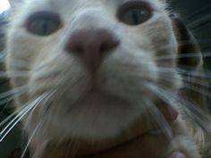 Huxley a playful outdoor kitten i wish was mine!!! Its Huxleys selfie!!!