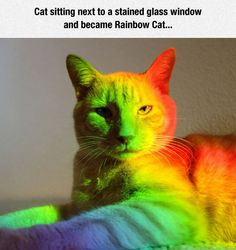 """""""The Rainbow-Colored Cat!"""""""