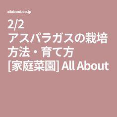 2/2 アスパラガスの栽培方法・育て方 [家庭菜園] All About