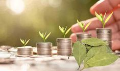 De ce este important să porți mereu această frunză în buzunar - Romania News Romania News, Plants, Plant, Planets