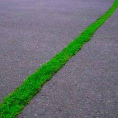 urban green line