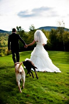 Bride and Groom Portrait with Dogs Overlooking the Mahoosuc Mountains by Casey…