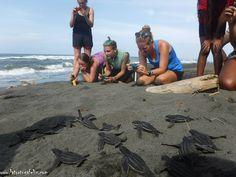 volunteer with sea turtles