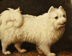 Mrs. French's White Lap Dog 1782 by George Stubbs