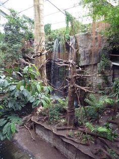 Lied Jungle - Spider Monkey/Baird's Tapir Exhibit