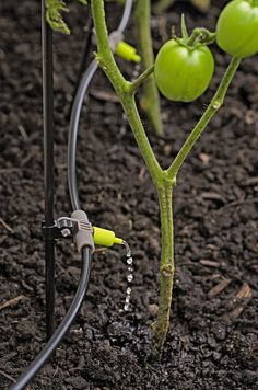 Deluxe Micro Snip-n-Srip Irrigation Kit with Stakes | Gardeners.com 8589722.