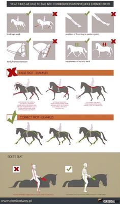 Pferde Dressur Ausbildung You are in the right place about Horse Riding Tips pictures Here we offer you the most beautiful pictures about the Horse Riding Horse Behavior, Horse Riding Tips, Horse Tips, Horse Exercises, Horse Anatomy, Horse Facts, Dressage Horses, Draft Horses, Horse Training