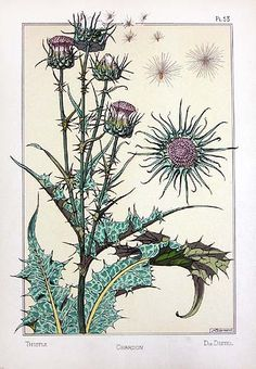 "Title: Chardon (Thistle) from ""La Plante et Ses Applications Ornamentale"", by Eugene Grasset"