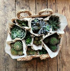 cute way to show off succulents