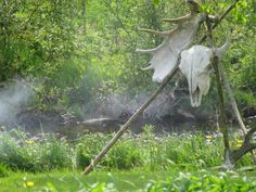 Buffalo skull and moose antler near my fire.....