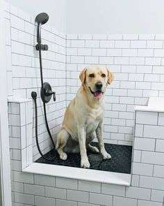 (paid link) World Leader In Self bolster Dog Bathing Stations #dogbathingstation Dog Bathing Station, Laundry Room Remodel, Laundry Rooms, Casa Loft, Farmhouse Laundry Room, Dog Wash, Dog Rooms, Dog Shower, Up House