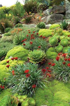 Succulent Landscaping, Landscaping With Rocks, Front Yard Landscaping, Succulents Garden, Landscaping Ideas, Backyard Ideas, Flowers Garden, Outdoor Landscaping, Rockery Garden