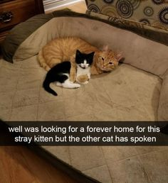 43 Funny Cats To Brighten Up Your Day