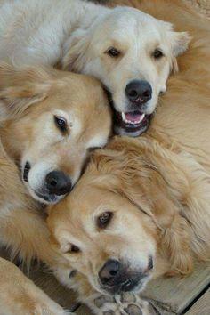 Three golden twins!