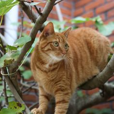 Do Cat Fences Really Work? This post first appeared on ProtectaPet here. This is a question we and ProtectaPet get from cat owners all the time. When you first see an outdoor fence system designed to contain pets without a roof barrier, people are left scratching their heads as to why their cat can't climb over. Let us tell you […] #Cat, #Cats, #Cute, #Katze, #Katzen, #Katzenworld, #Kawaii, #Pets, #ねこ, #猫 #AdviceTips