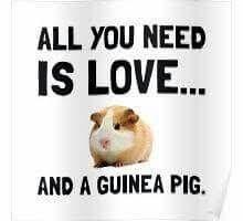 Resultado de imagen para guinea pig quotes