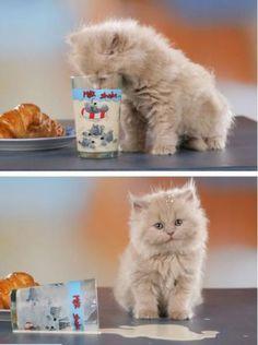 it wasn't me | funny cat lolfunny cat lol