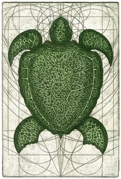 Green Turtle Painting by Charles Harden - Green Turtle Fine Art Prints and Posters for Sale