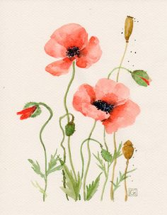 Floral Art Watercolor painting Original Flower art Red poppies Wild flowers Botanical Illustration C Watercolor Poppies, Watercolor Cards, Red Poppies, Watercolour Painting, Painting & Drawing, Watercolors, Easy Watercolor, Botanical Art, Botanical Illustration