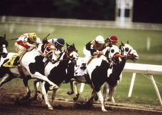 Fort Worth, Texas, USA  Photograph: Horsebackmagazine.com   Paint Horse Racing