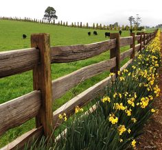 Stunning Useful Ideas: Fence Trellis Ideas Backyard Fence Toronto.Front Yard Fence For Privacy Backyard Fence White. Country Fences, Rustic Fence, Farm Fence, Dog Fence, Rustic Pergola, Pallet Fence, The Farm, Fence Landscaping, Backyard Fences