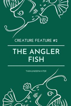 Have you ever encountered this featured creature? If you have eaten monkfish or seen a frogfish, then yes you have. These are both a type of anglerfish. Learn about how these creatures engage in sexual parasitism. Marine biology  biology  science  ocean  conservation  environement  education  creature feature  anglerfish  fish  marine biologist Angler Fish, Biologist, Marine Biology, Creature Feature, Live Life, Conservation, Creatures, Ocean, Science