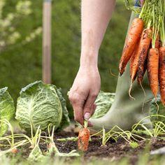 Potager facile : comment cultiver un potager facilement ?