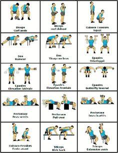 exercice musculation bras femme