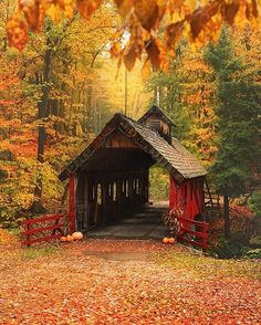 The pouring rain made the fall colors really shine and become a @nature explosion! ~ Loon Song Covered Bridge, Michigan. Photo by @snaphappymichigan