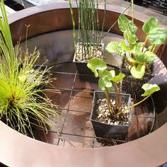 Planting container ponds  Tips on planting awater gardening container pond feature withsmall varieties of   water plants that will providea patio pond containerfor a smaller garden space.