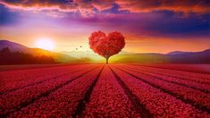 Spread love everywhere you go today! Tree Wallpaper, Heart Wallpaper, Scenery Wallpaper, Nature Wallpaper, Champs, Good Morning Dear Friend, Heart Tree, Love Images, Image Hd