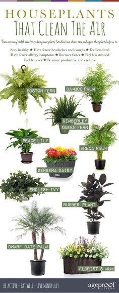 10 Best Houseplants That Clean The Air – We all know that fresh air is vital for our good health, but what if you're stuck indoors most of the time? Heather McNicol, from interior landscaper, Urban Planters, shows how just one or two air-purifying plants can make all the difference to our wellbeing. http://ageproofliving.com/best-house-plants-that-clean-the-air #detox #natural #holistic #air-purifying