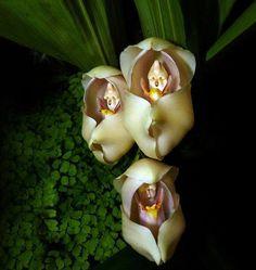 1000 Meilleures Images Du Tableau Fleurs Magnifiques 2 Beautiful