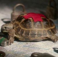 Clyde is Sherlock Holmes' pet tortoise. Holmes rescued Clyde from the home of a murder victim...