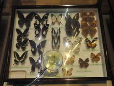 Museum collections are being utilised in order to investigate how climate change is affecting some species. http://www.conservation-jobs.co.uk/59715/museum-collections-reveal-effects-of-climate-change/