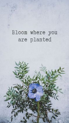 Wallpaper Iphone Quotes Floral Ideas For 2019 Wallpaper Iphone Quotes Floral Ideas For 2019 - Unique Wallpaper Quotes Positive Quotes Wallpaper, Quote Backgrounds, Wallpaper Quotes, Wallpaper Backgrounds, Iphone Wallpapers, Spring Backgrounds, Pastel Wallpaper, Wallpaper Ideas, Disney Wallpaper