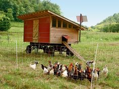 Perfect for Hedgerow and egg production. Love placement of solar panel for fence.
