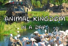 Disney World Animal Kingdom Tips/Overview