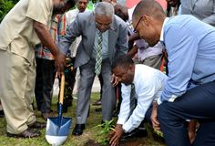 Jamaica has planted its first legal marijuana plant