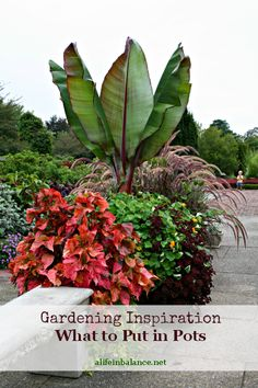 Gardening Inspiration: Plant Combinations for Pots